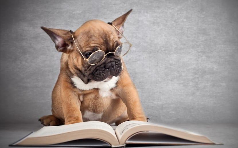 Perros pueden aprender muchas palabras