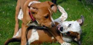 Perros jugando en el parque.
