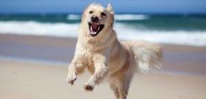 Perro saltando en la playa.