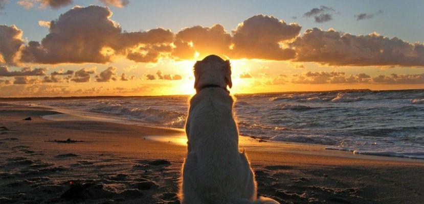 Perro mirando el atardecer en la playa.