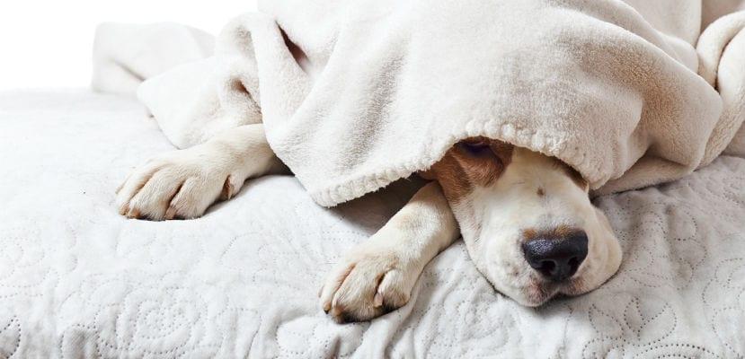 Perro durmiendo.