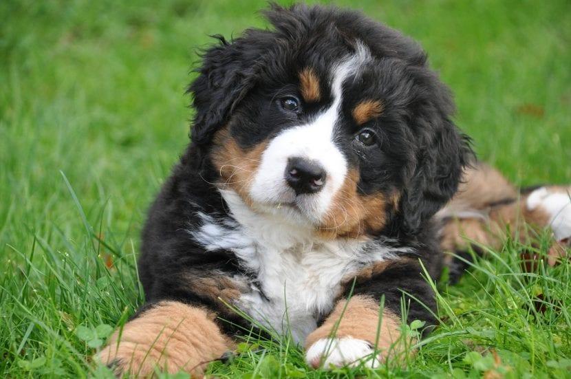 Cachorro de perro joven
