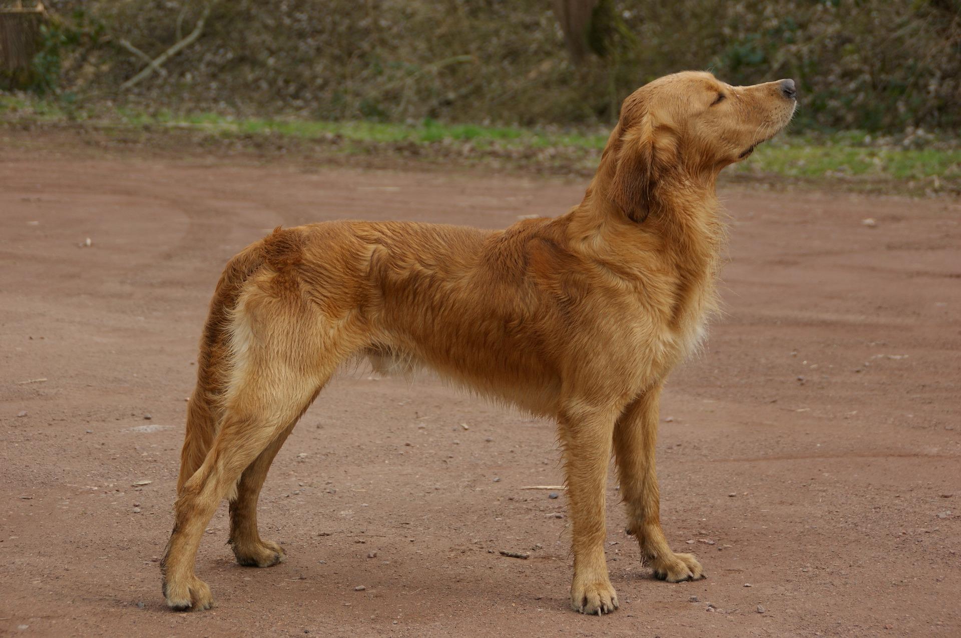 Tu perro puede adelgazar por varios motivos