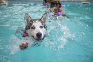 deporte en perros ancianos