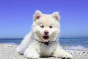 perro completamente feliz