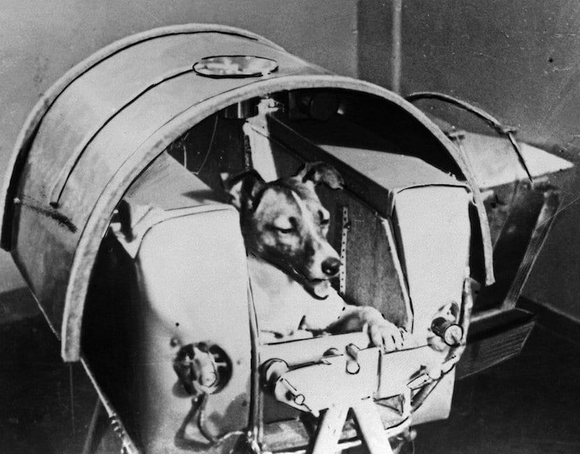 Laika perro astronauta