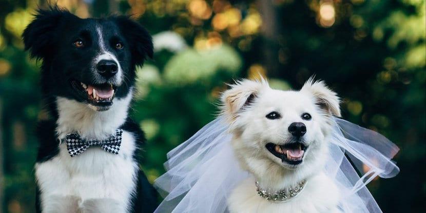 los perros se enamoran