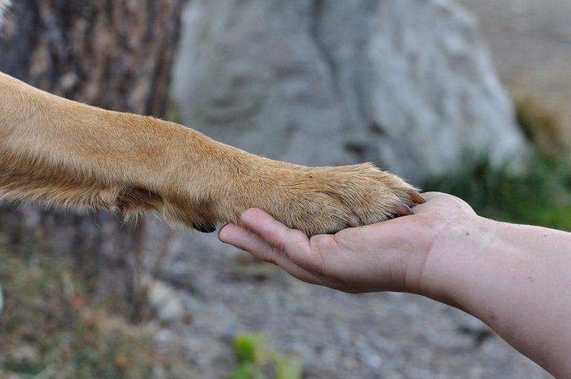 Pata de perro y mano