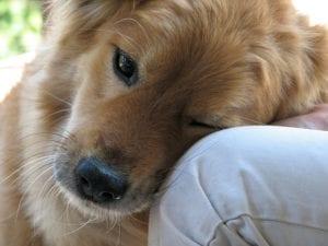 Perro mostrando cariño a su humano