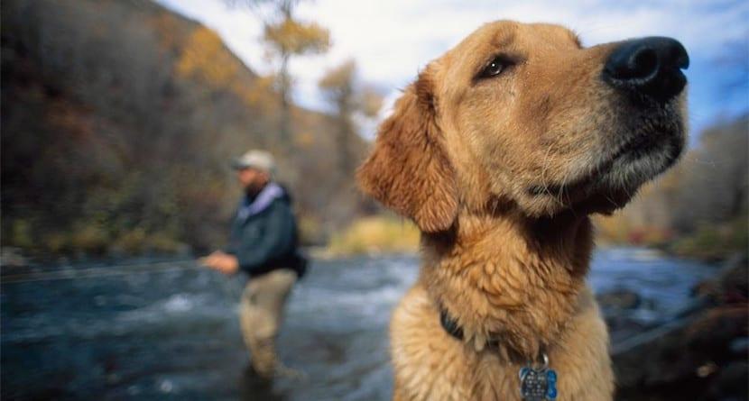 Perros pueden reconocer emociones