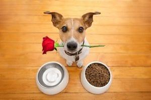 pienso son cereales para perros