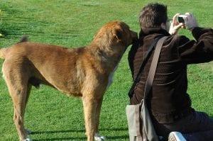 Perro con humano