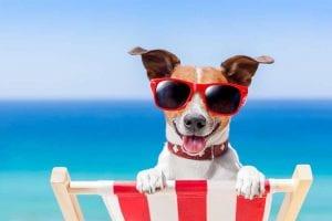 que hacer con tu perro en verano
