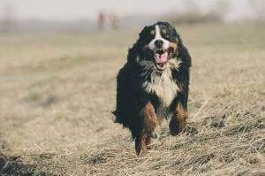 hidrolatos para un perro mas feliz