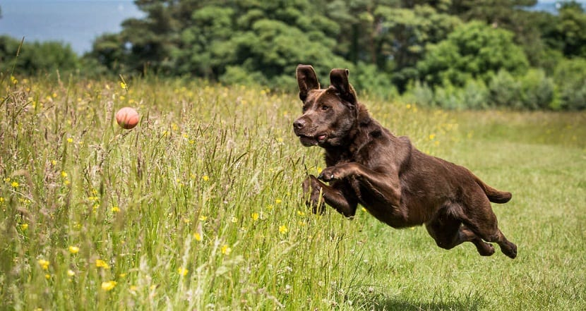 Diferentes ejercicios para perros ancianos