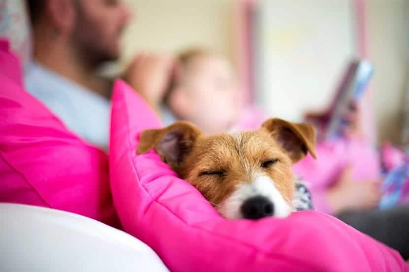 ¿Puede dormir el perro con nosotros en la cama?