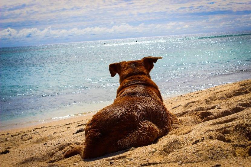 Perro tumbado en la playa