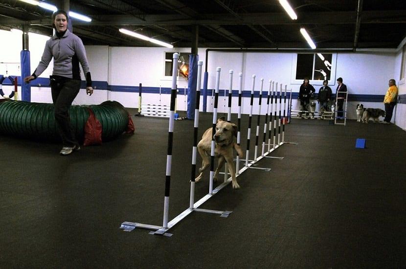 un perro siendo entrenado