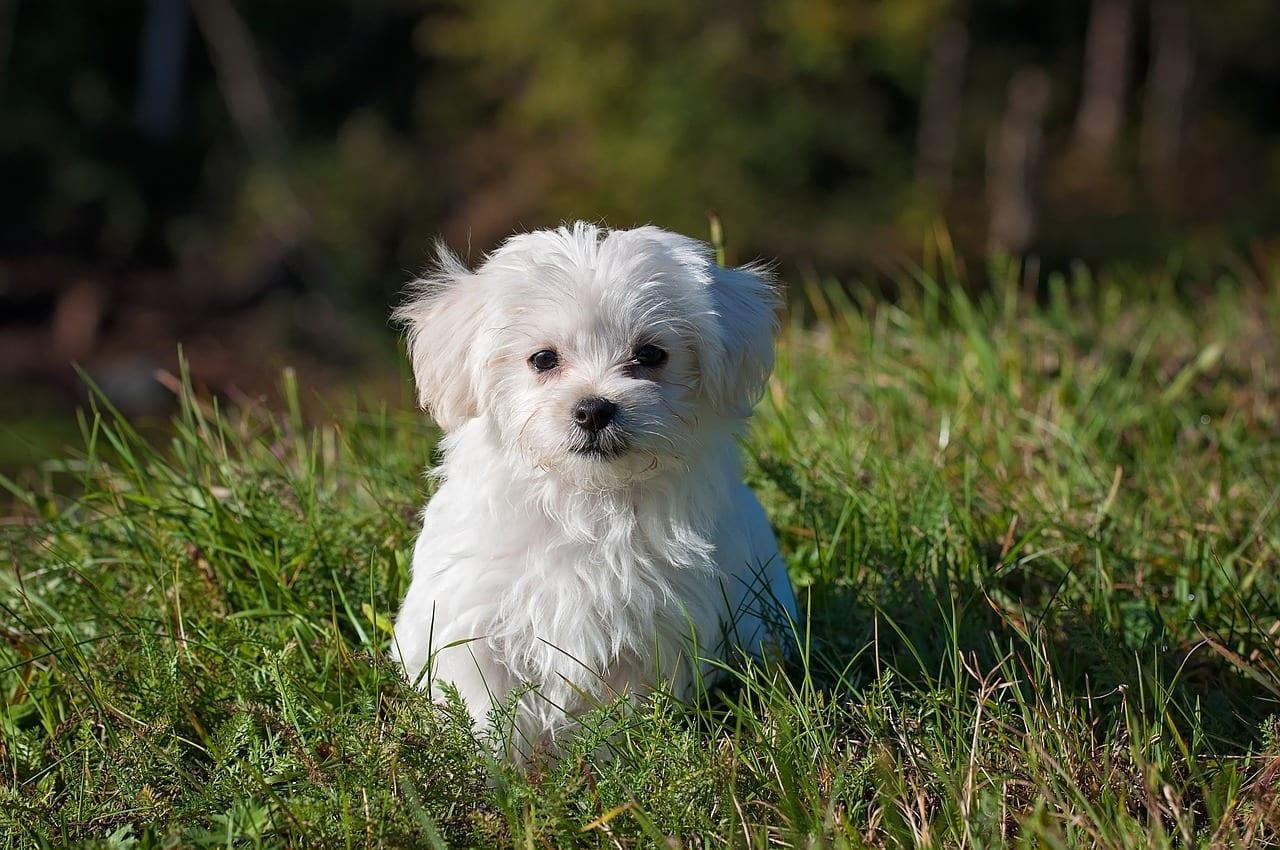 Perro joven en el césped
