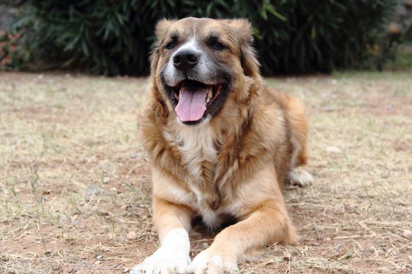 Perro mestizo feliz