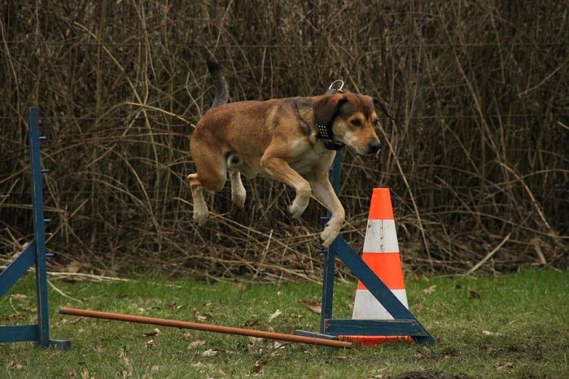 forma profesional de ir superando los retos que suponen convivir con una mascota