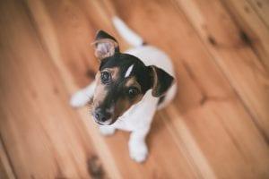 Perro sentado en el suelo