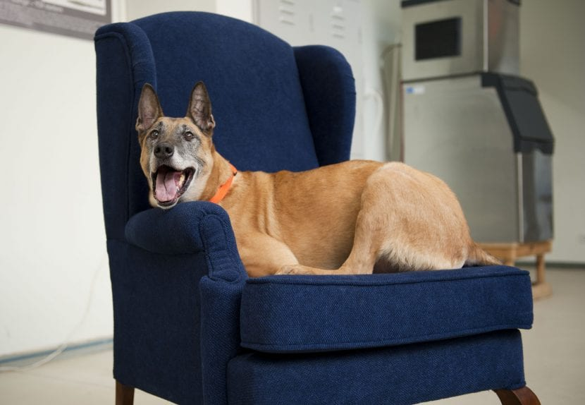 Perro tumbado en un sillón