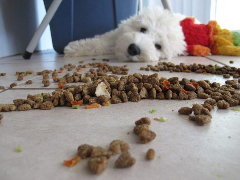 Perro jugando con su comida