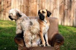 perro celoso como problema de comportamiento
