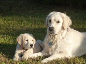 presentacion entre perros