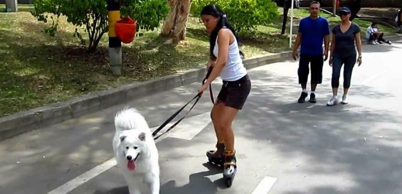 Mujer patinando junto a su perro o practicando rollerjoring.