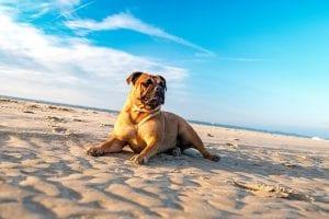 agua del mar perros