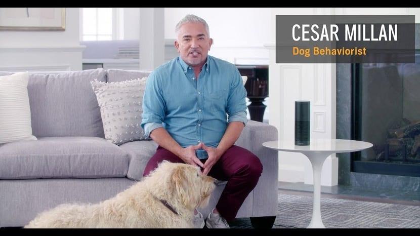 audiolibro para perros