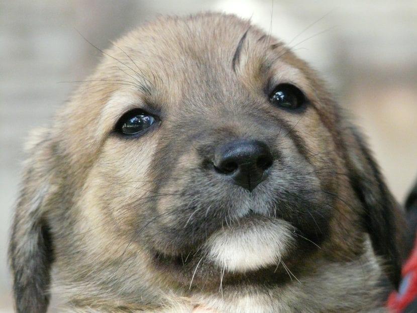 Dulce mirada de cachorro