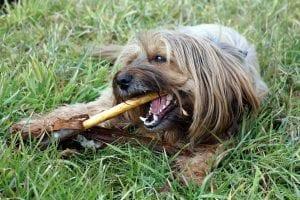 Perro jugando con un palo