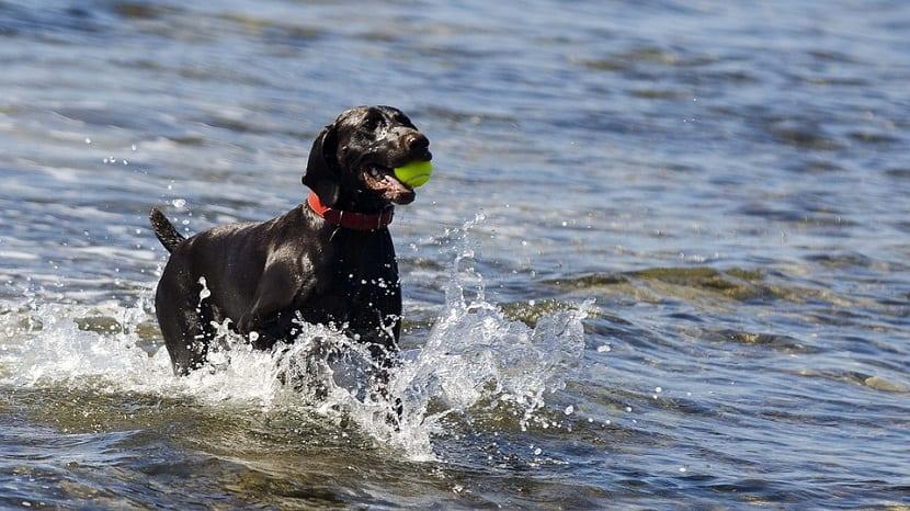 propiedades agua del mar perros