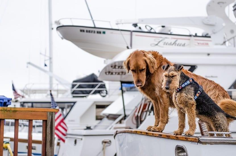 perros que viajan en barco