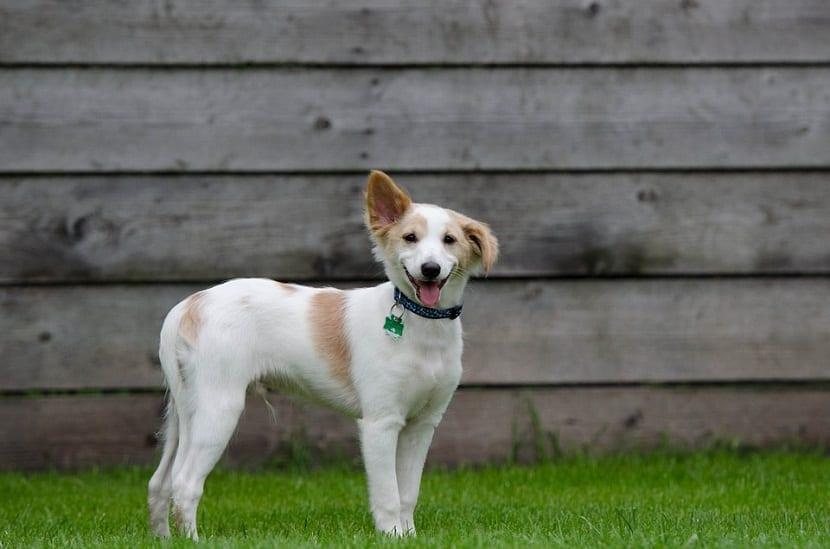 cachorro en adopcion