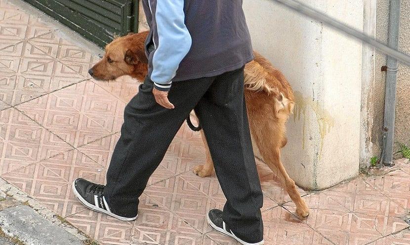 las perras orinan en cuclillas