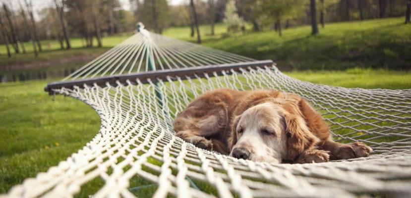 Perro tumbado en una hamaca.
