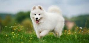 Perro corriendo en el campo.