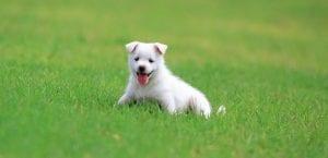 Cachorro entre la hierba.