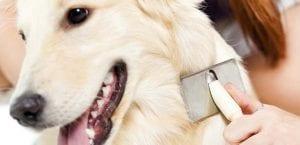 Cuidar pelo del perro