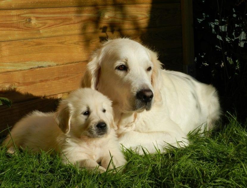 Madre perra con su cachorro