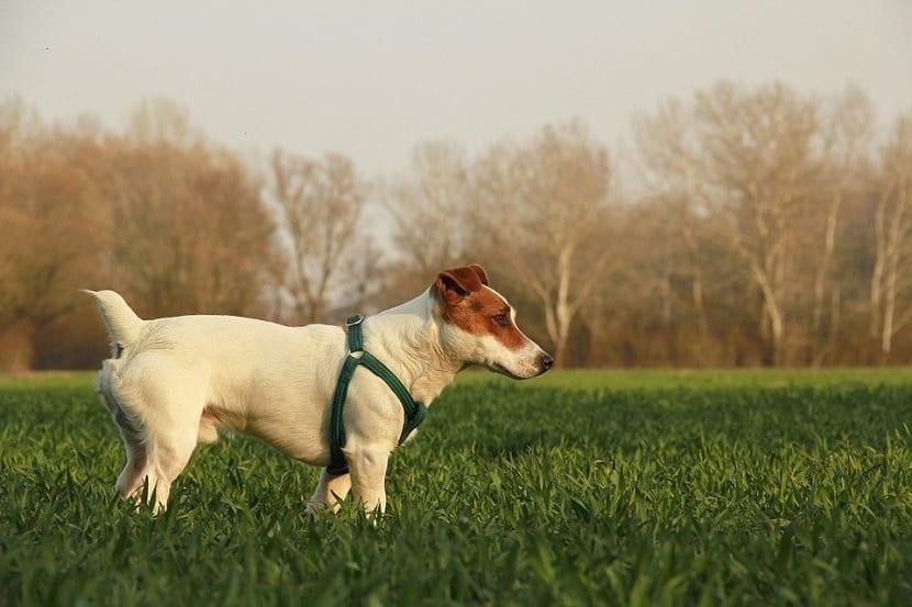problemas de conducta en perros