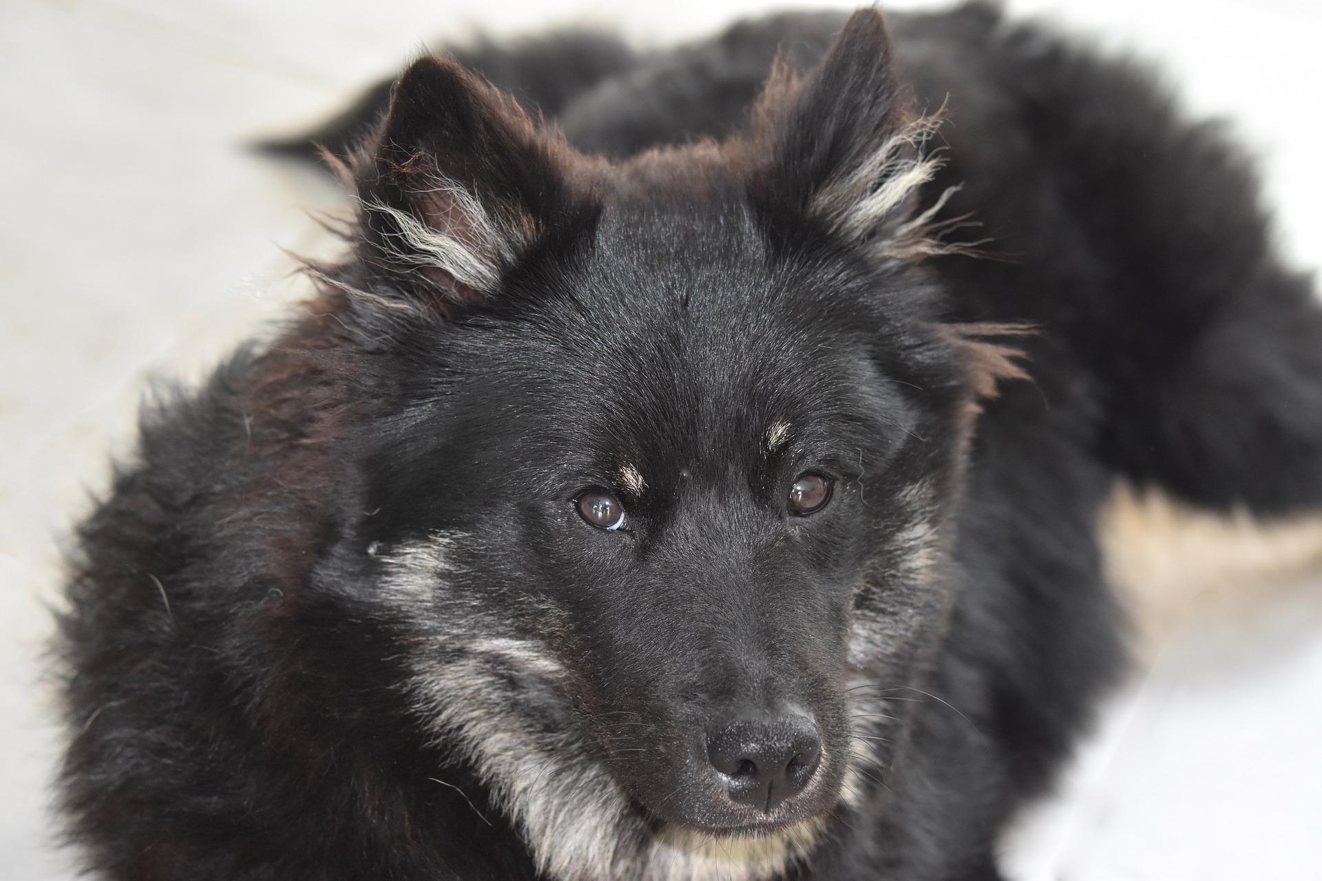 Eutanasia Cuándo Hay Que Sacrificar Al Perro Mundo Perros