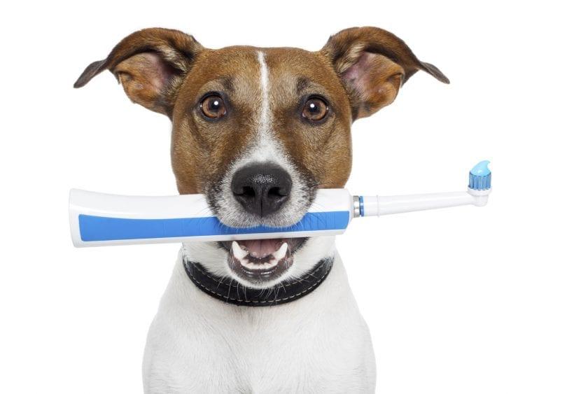 Perro con cepillo de dientes