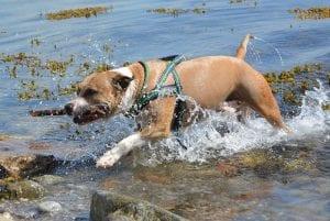 entrenamiento fisico perros