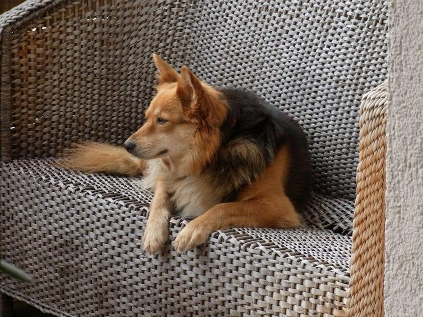 Perro descansando en el sofá