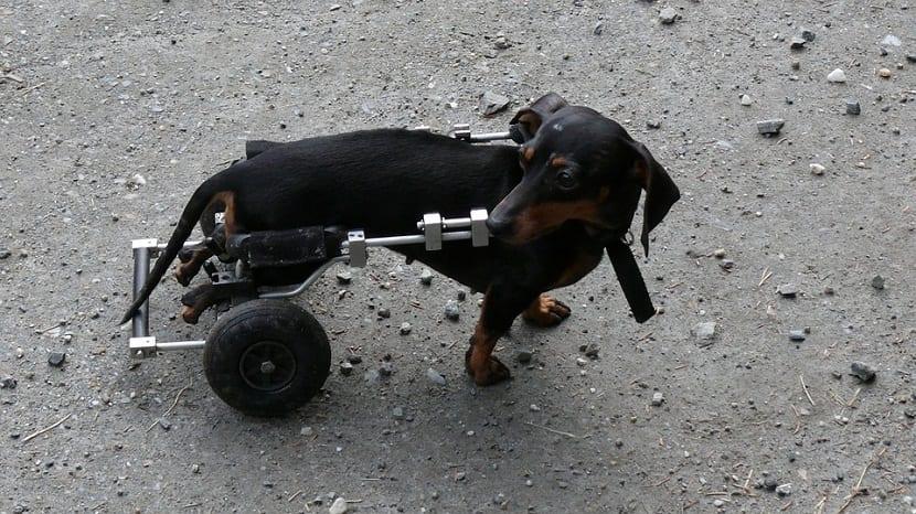 eutanasia en perro sano